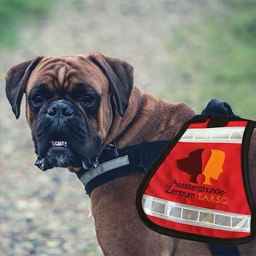 Hundehalsband besticken